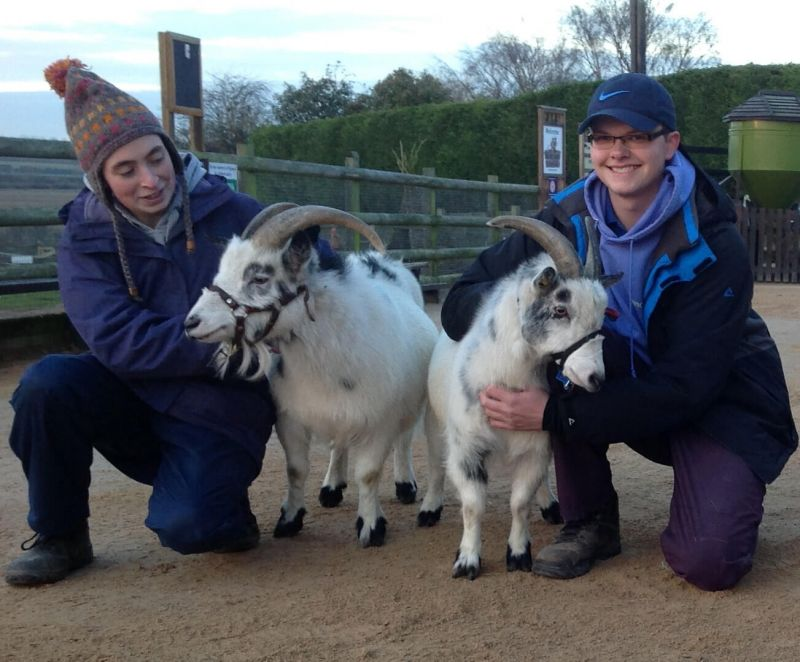 Goats - Manor Farm
